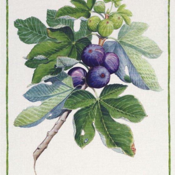 Fig Italian Linen Tea Towel