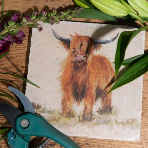 Highland Cow - Kate of Kensington