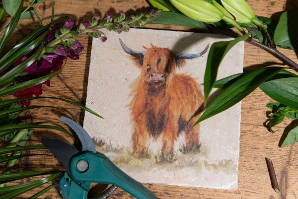 Highland Cow - Kate of Kensington