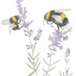 Bees on Lavendar - Mosney Mills