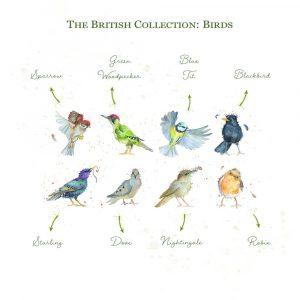 Kate of Kensington British Collection Birds Sharing - Breeds