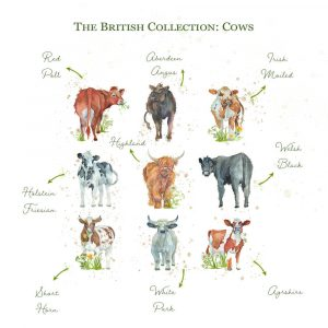 Kate of Kensington British Collection Cows Large - Breeds