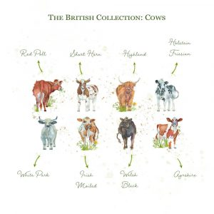 Kate of Kensington British Collection Cows Sharing - Breeds